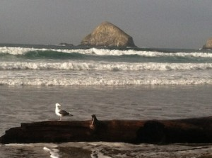 SurfGullHstckRock